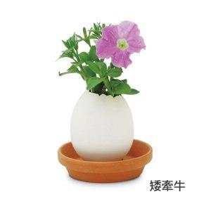 【Eggling】植物栽培蛋 花系列-矮牽牛