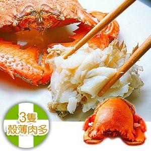 【幸福小胖】澳洲超大旭蟹 3隻